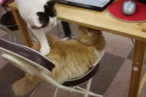 ちょかいをかける猫。