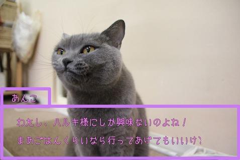 IMG_あんこ