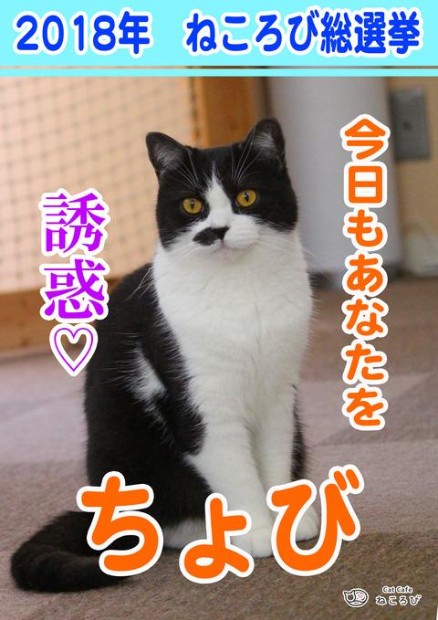 総選挙2018ちょび