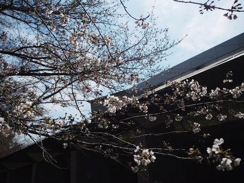 お花見2017_301