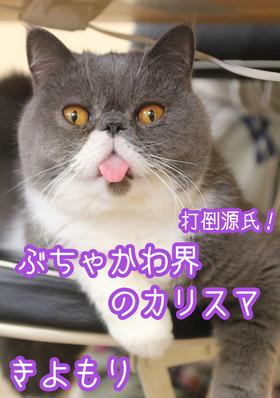 きよのコピー