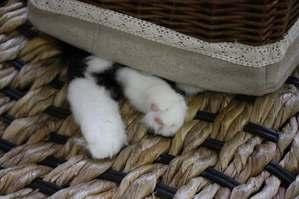 猫足おもちゃ。