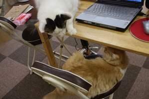猫に睨まれる猫。
