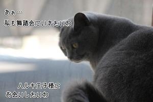 IMG_8650-1
