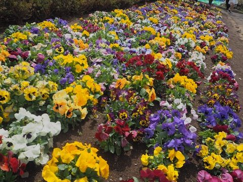お花見2017_9611