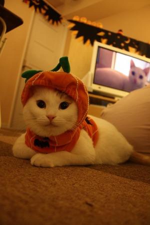 かぼちゃもっちー