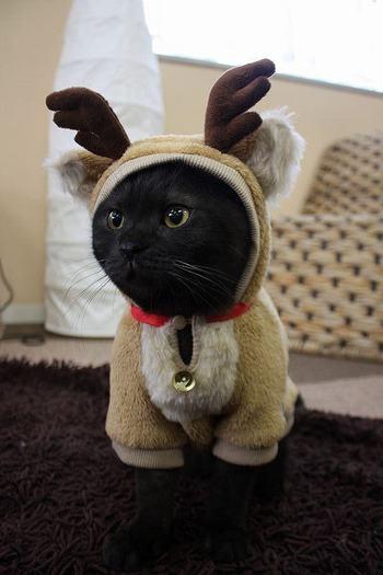 黒猫はねぇ…。