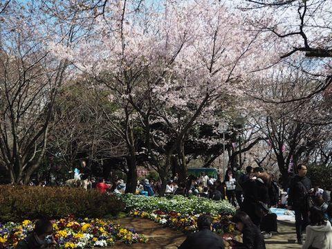 お花見2017_156