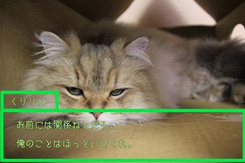 IMG_くりりん