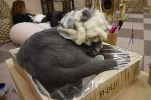アフロ猫…?