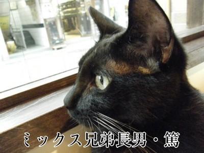 篤 (84)