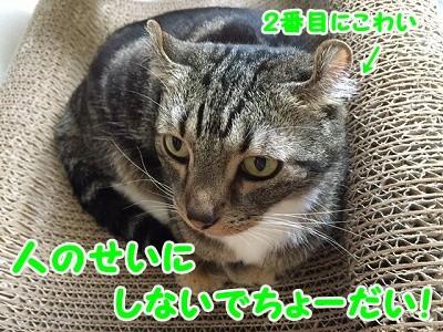 かな (52)