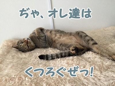 翔 (85)