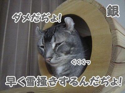 銀 (11)