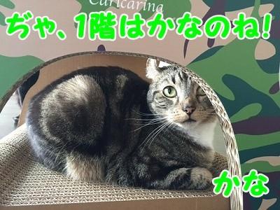 かな (44)