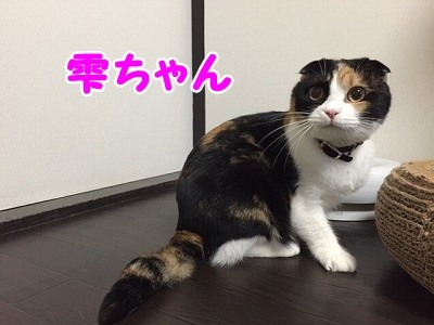 雫・陽 (27)