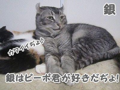銀 (38)