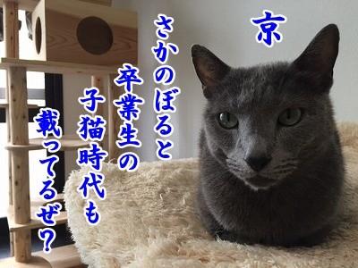 京 (54)