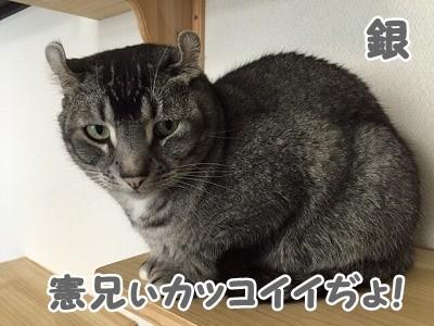 銀 (52)