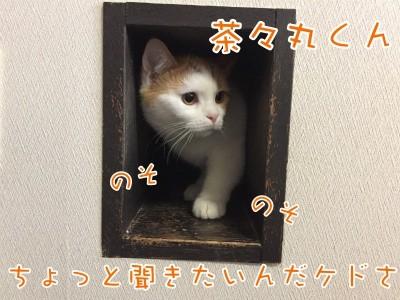 ちゃま11
