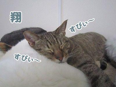 翔 (5)