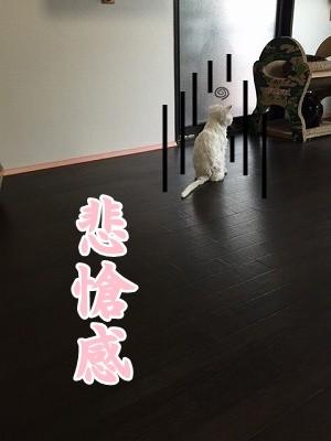 らん (11)