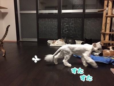 風 (84)