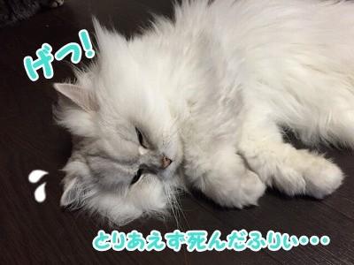 風 (76)