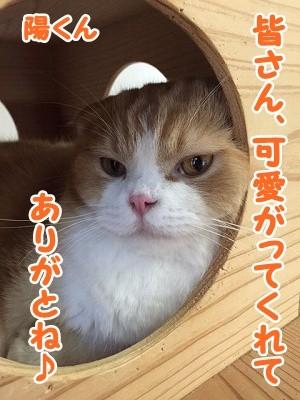雫・陽 (39)