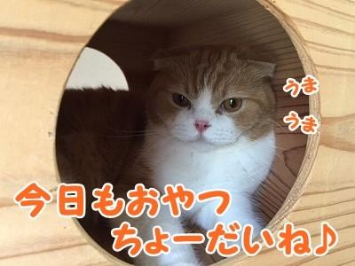 雫・陽 (33)
