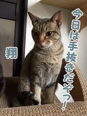 翔 (61)
