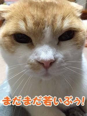凌 (2)