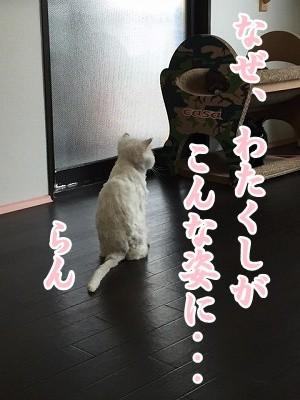 らん (12)