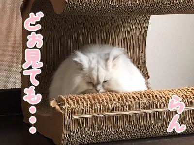 らん (8)