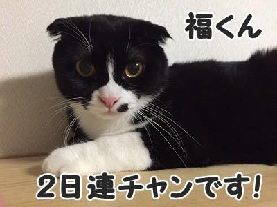 ふく (23)