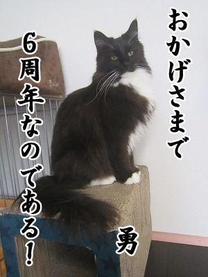 勇 (12)