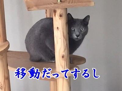 京 (32)