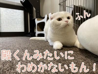 ひめ140
