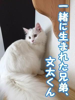 ぶん (3)