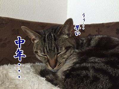 空 (12)