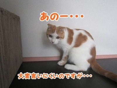 まお (6)