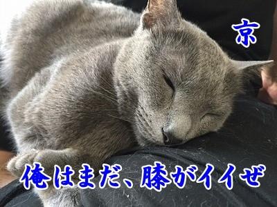 京 (51)