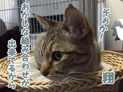 翔 (53)