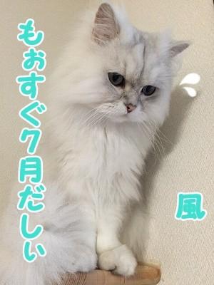 風 (61)