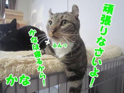 かな (47)