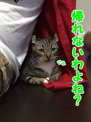 かな (79)