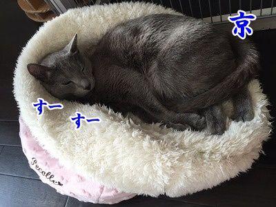 京 (15)