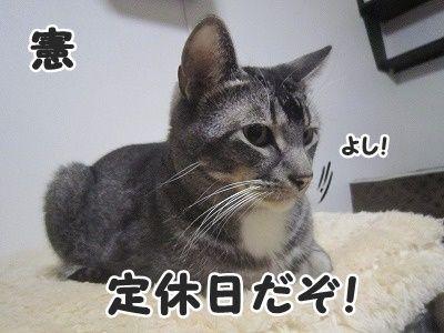 憲 (6)