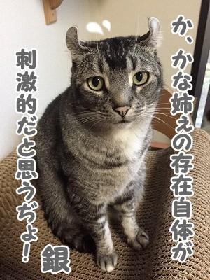 銀 (58)