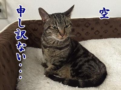 空 (29)